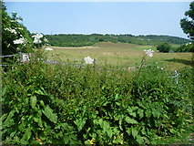 TQ5959 : View from the North Downs Way at Exedown Road by Marathon