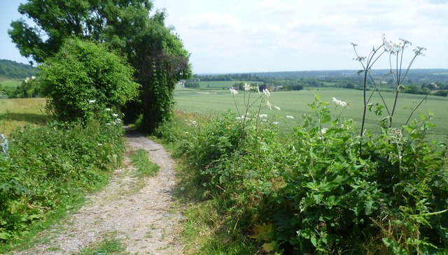 The North Downs Way leading away from Exedown Road