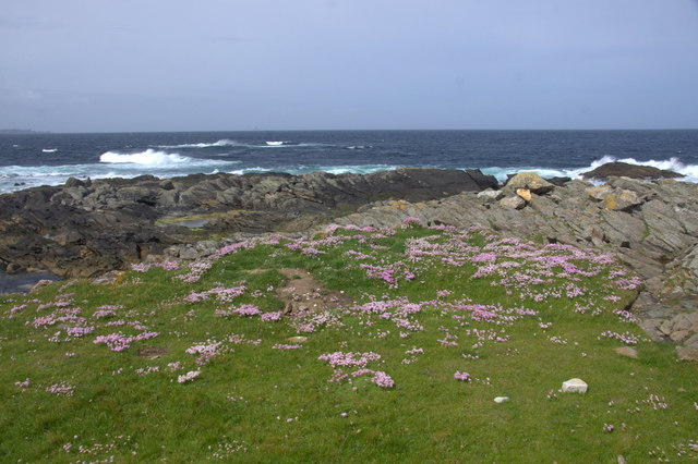 Thrift on Spoo Ness, Westing