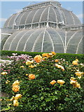 TQ1876 : Rose garden and palm house, Kew gardens by David Hawgood