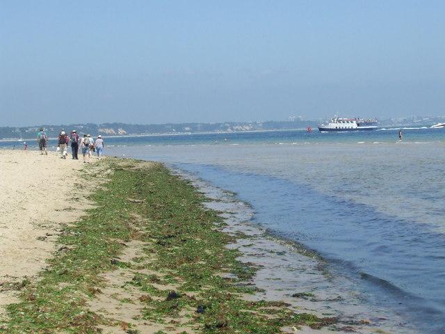 Seaweed on Studland Beach