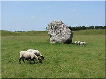SU1070 : Stone and sheep at Avebury by Gareth James