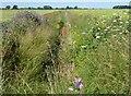 TL4286 : Colourful dike on Langwood Fen Drove by Richard Humphrey