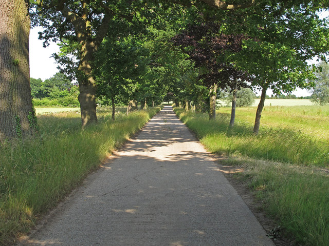 Tree lined bridleway to Bluegate Hall, Great Bardfield