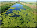 TL4087 : Green and blue drain on Nightlayer's Fen, Chatteris by Richard Humphrey