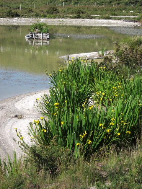 Flags by pond, Smallhanger Waste