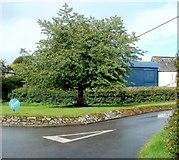 SO1327 : Tree bench, Llangors by Jaggery