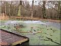 SP9713 : Clickmere Pond, Ashridge, covered with ice (early February 2010) by Chris Reynolds