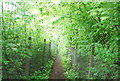 TQ3149 : Tandridge Border Path by N Chadwick