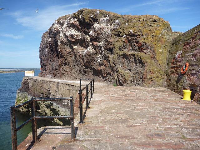 Coastal East Lothian : Kittiwake Crag, Victoria Harbour Entrance, Dunbar