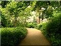 NZ0878 : The Quarry Garden, Belsay Hall by David Dixon