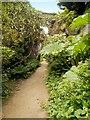 NZ0878 : Belsay Hall Quarry Garden by David Dixon