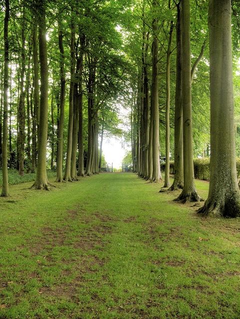 Avenue of Trees, Hidcote Manor Gardens