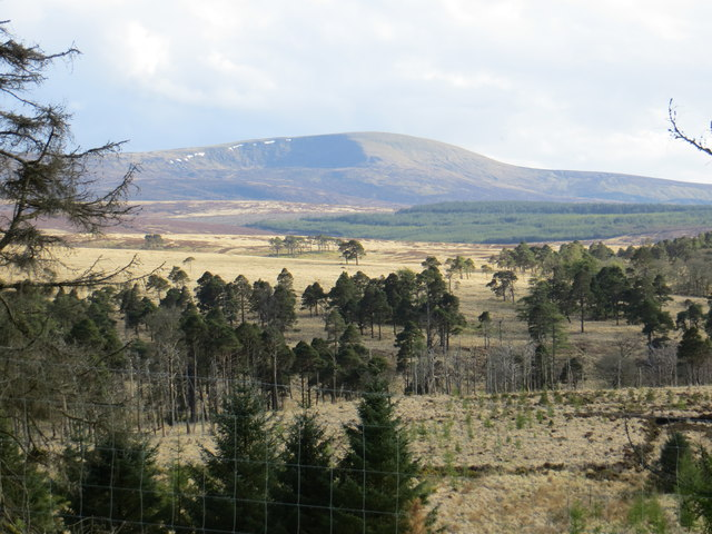 Coronation Plantation (section) seen from road to Sally Gap
