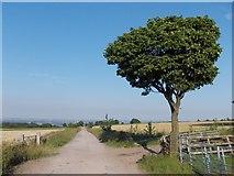 SK3069 : Looking eastwards down Loadshead Lane by Neil Theasby