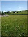 SD9489 : Hay meadow and Aldbrough House near Bainbridge by Karl and Ali