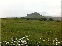 G6546 : Field at Cashelgarran by Darrin Antrobus