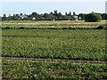 TF5421 : Farmland south of New Roman Bank by Mat Fascione