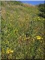 SX8966 : Flowery bank by Riviera Way by Derek Harper