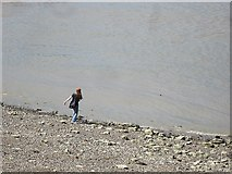 TQ3180 : Skimming stones on the River Thames by Patrick Mackie