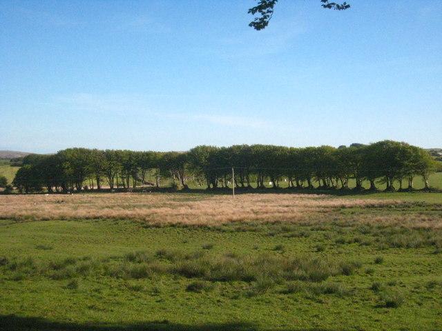 Row of trees near Lower Treblary