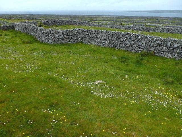 Inis Oírr fields