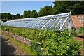 TG1728 : Blickling Hall - Walled kitchen garden by Ashley Dace