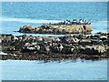 C6540 : Guano-encrusted tidal rocks with cormorants at Greencastle by Oliver Dixon