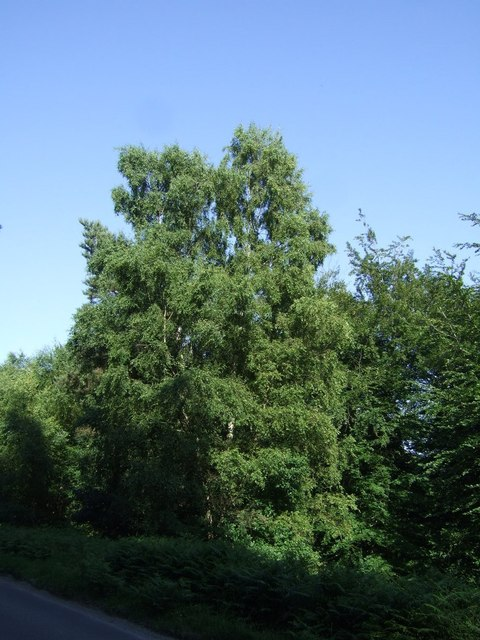 Woodland beside Rugeley Road