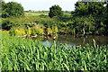 SP8024 : Duck pond by Manor Farm by Philip Jeffrey