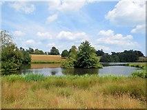 SU9622 : Islands in Upper Pond by Paul Gillett
