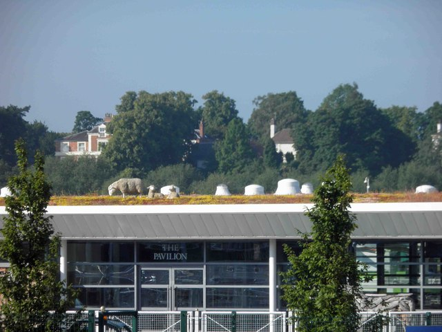 Sheep (models) grazing on the green roof of Chester racecourse