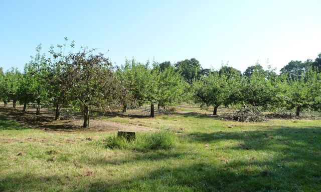 Public footpath entering an apple orchard