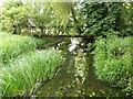 SP7211 : The River Thame from Cuddington Bridges by Steve Daniels