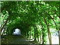 SZ1692 : Arbour, Christchurch Priory by Nigel Mykura