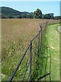 SN4760 : Estate fence Llanerchaeron by Steve  Fareham