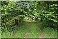 SU4255 : Looking into Beech Hanger Copse by Sandy B