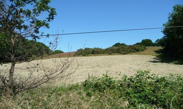 Hay field between Foxbury and Gazedown Woods