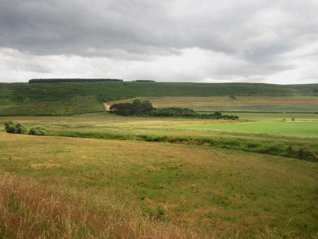 Grassland near Weetwood Hall