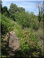 ST6172 : River Avon Trail by Derek Harper