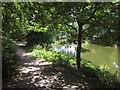 ST6272 : River Avon near Conham River Park by Derek Harper