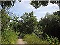ST6370 : River Avon Trail by Derek Harper