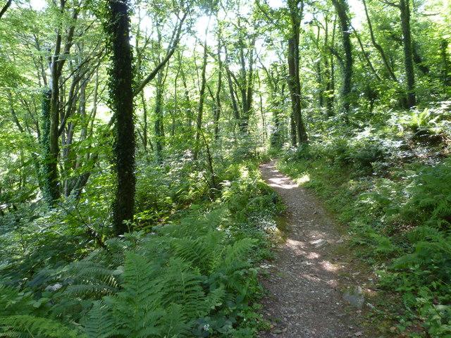 Woodland path, Halgabron