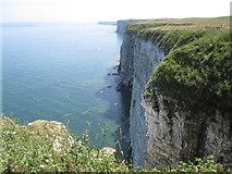 TA1974 : Bempton Cliffs - View along cliffs towards Flamborough by Alan Heardman