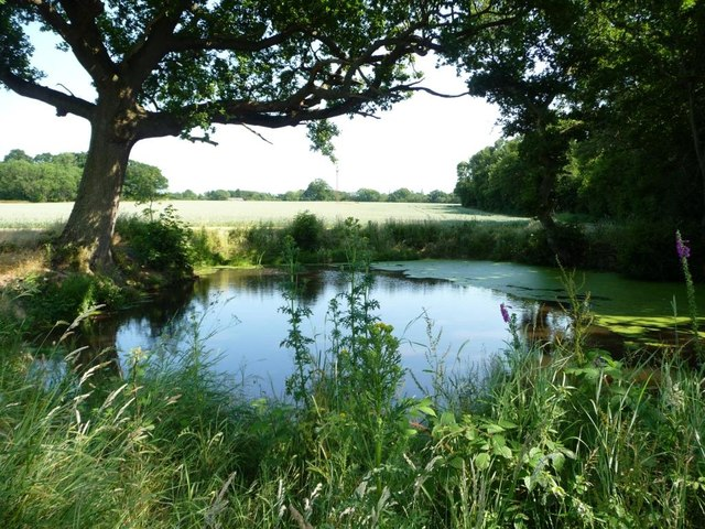 Pond on the northern edge of Church Wood