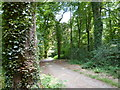 SX0963 : Woodland path, Great Wood, near Newton by Maurice D Budden