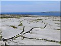 L9305 : Limestone pavement, Inishmaan by Oliver Dixon