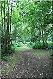 TQ1463 : Arbrook Common by Hugh Craddock