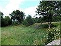 SO1141 : Riverside field near Llanstephan by Jaggery