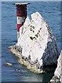 SZ2884 : Needles Lighthouse by David Dixon